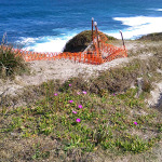 Coast Track: Purple Flowers