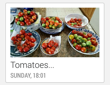 MMS: Tomatoes...