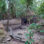 Hartley's Crocodile Adventures, June 2015: Cassowary