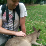 Hartley's Crocodile Adventures, June 2015: Kangaroo